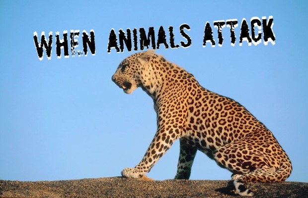 Animals attack!!
